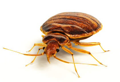 Commercial Bed Bug Control