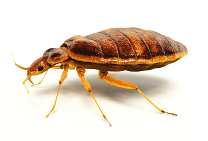 Residential Bed Bug Control