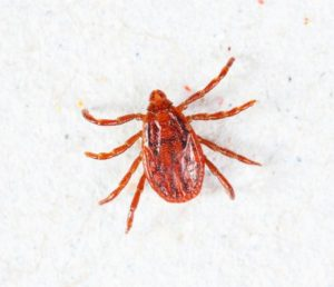 Pest Library: Ticks