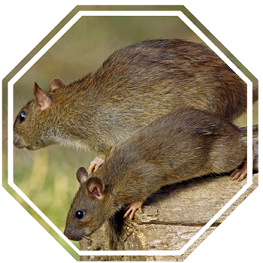 rodent-control-circle