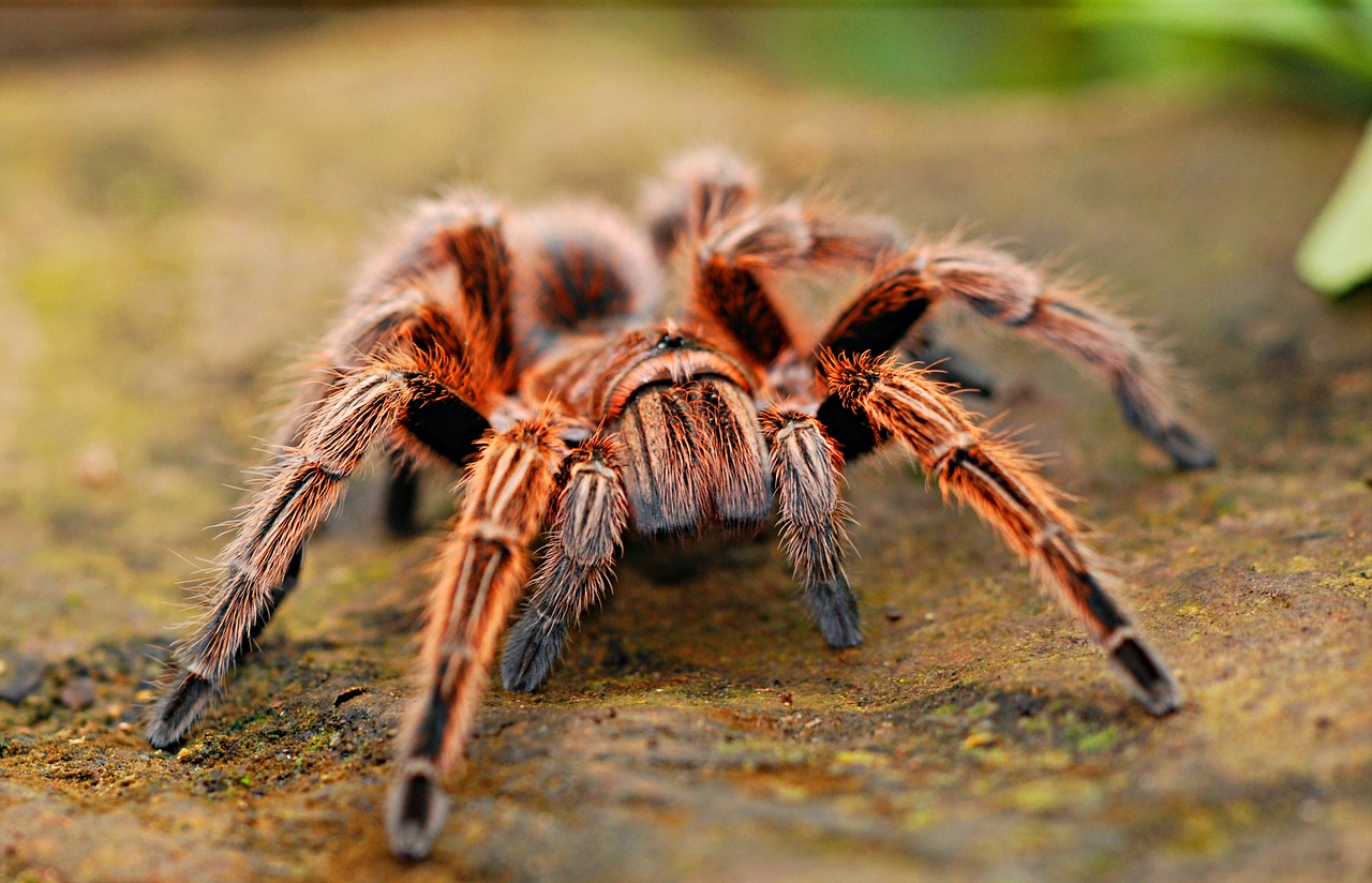 7 Interesting Facts about Spiders