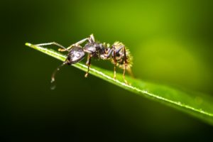 Hоmе Ant Prevention Mеthоdѕ