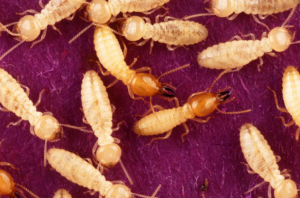 How often do you get a termite inspection?