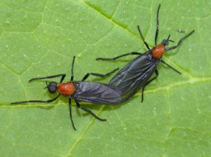 Important facts about lovebug season