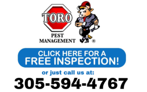 FREE-INSPECTION-ASIAN-TERMITE (1)